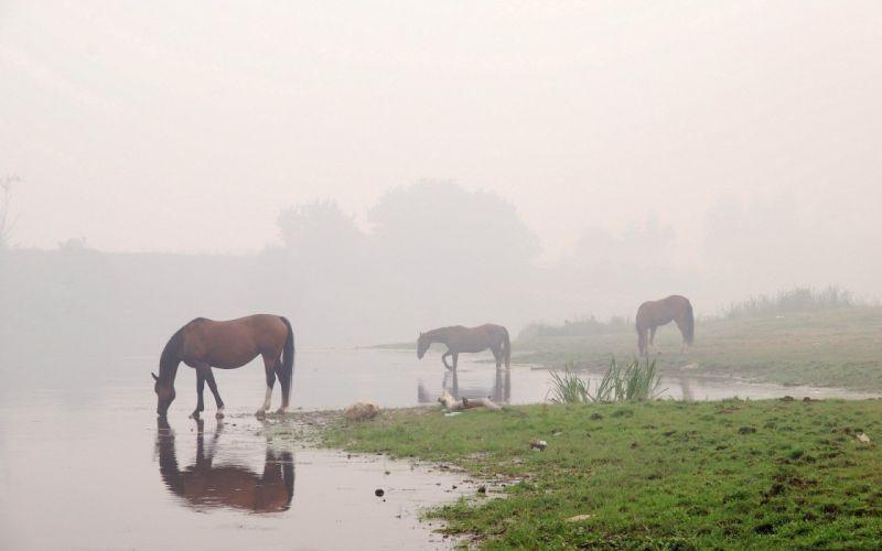 water animals fog horses reflections wallpaper