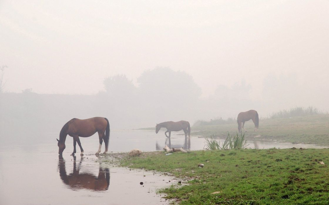 water animals fog horses reflections wallpaper