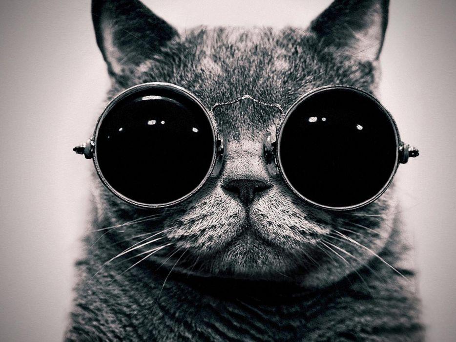 cats glasses funny monochrome wallpaper