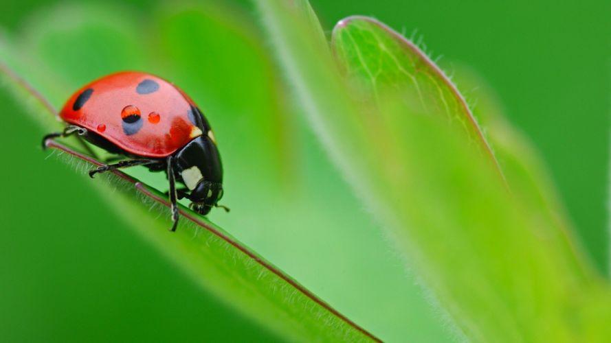 animals grass ladybirds wallpaper