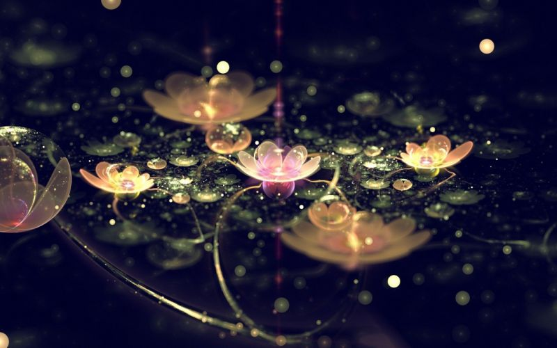 flowers lily pads wallpaper