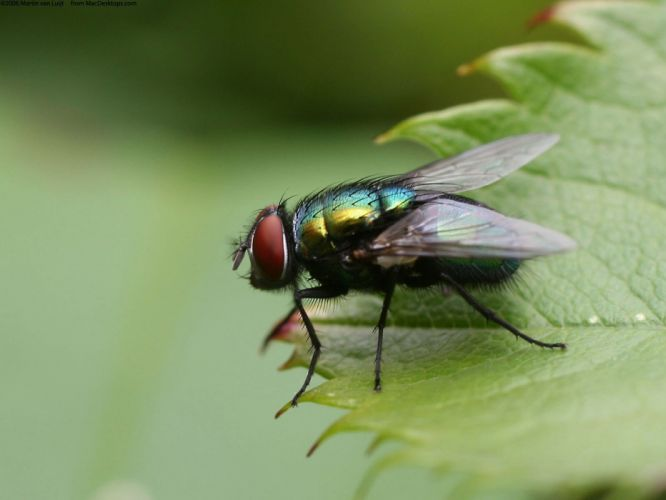 nature insects fly wallpaper