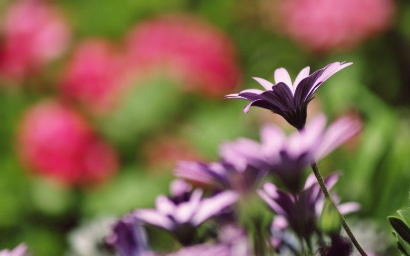 nature flowers summer wallpaper