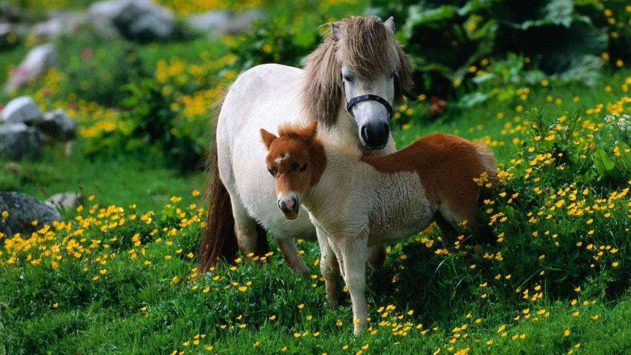 animals ponies yellow flowers wallpaper