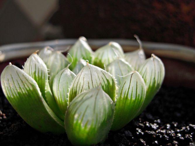 light green leaves plants wallpaper