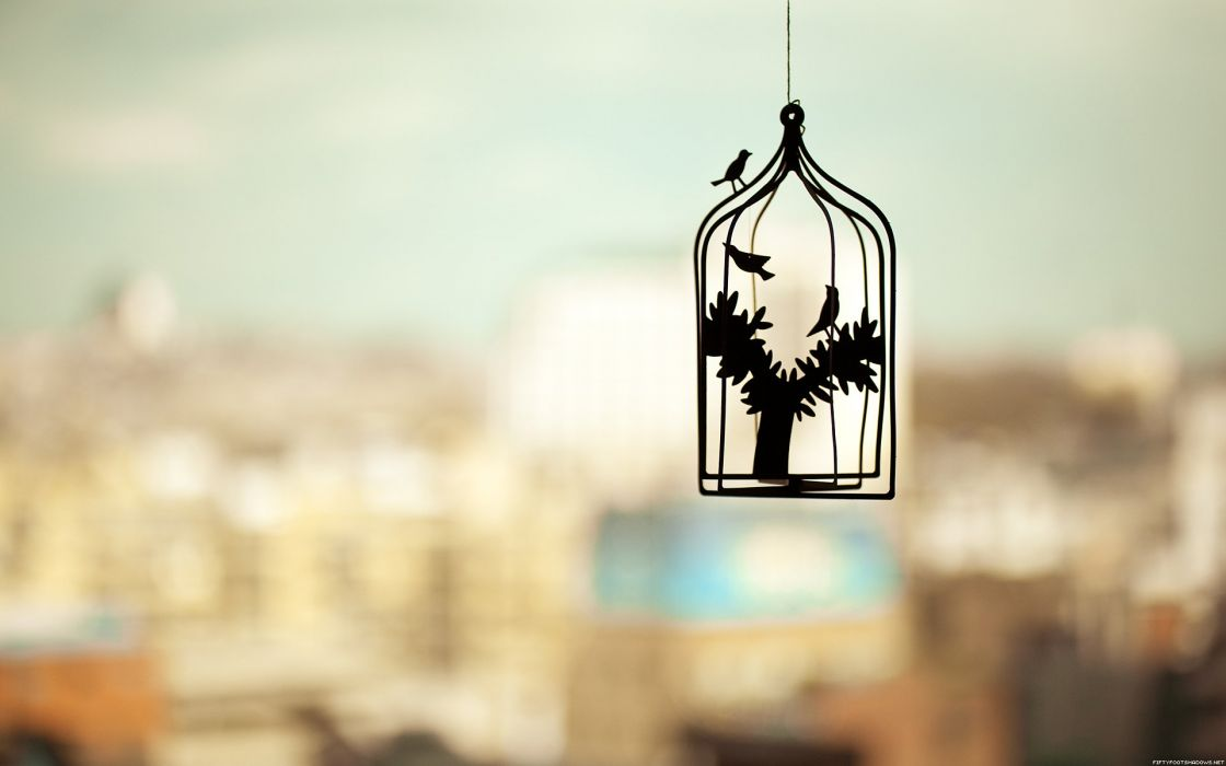 silhouettes birdcage cage wallpaper