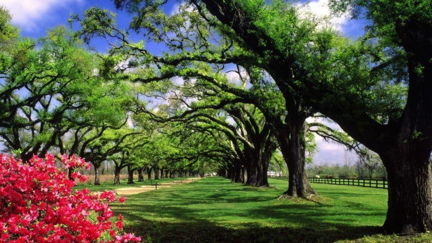trees hall plantation South Carolina wallpaper