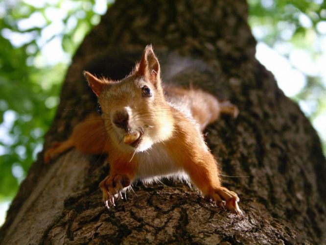 trees animals squirrels nuts wallpaper