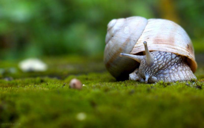 landscapes nature snails wallpaper