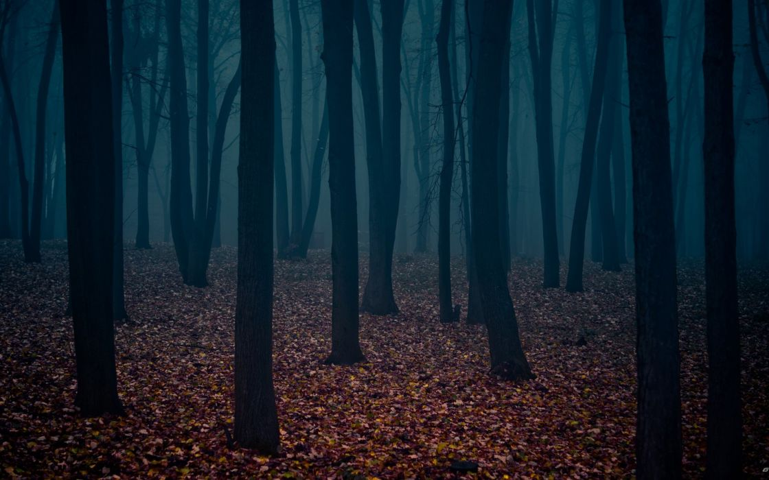 nature trees autumn forests leaves fog Gothic atmospheric wallpaper
