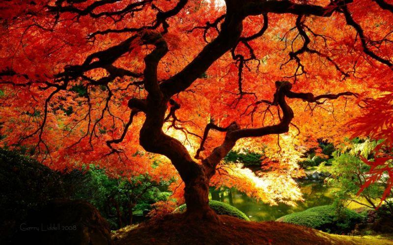 nature trees colors wallpaper