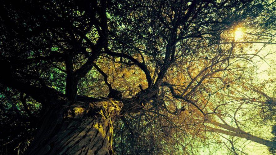 nature trees autumn wallpaper