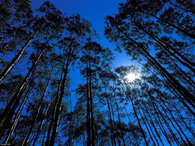 trees skyscapes wallpaper