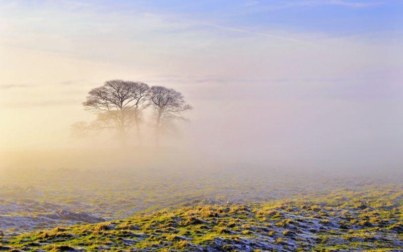 trees mist wallpaper