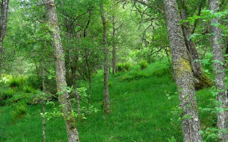 nature trees forests grass Scotland HDR photography wallpaper
