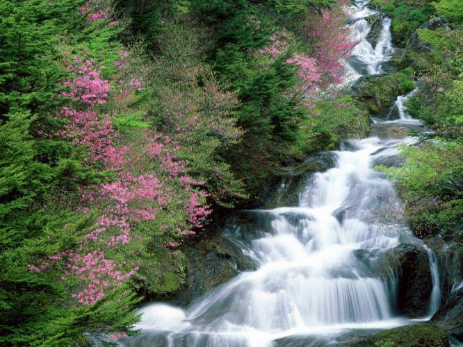 trees flowers waterfalls wallpaper