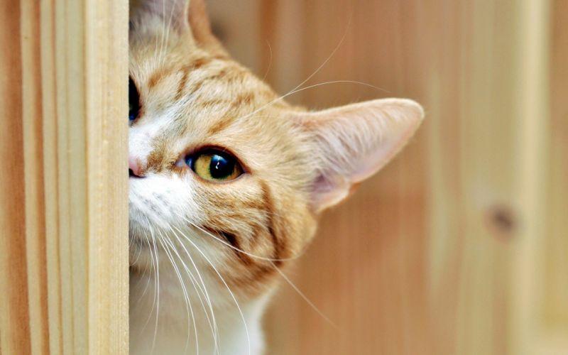 wood animals pets muzzle wallpaper