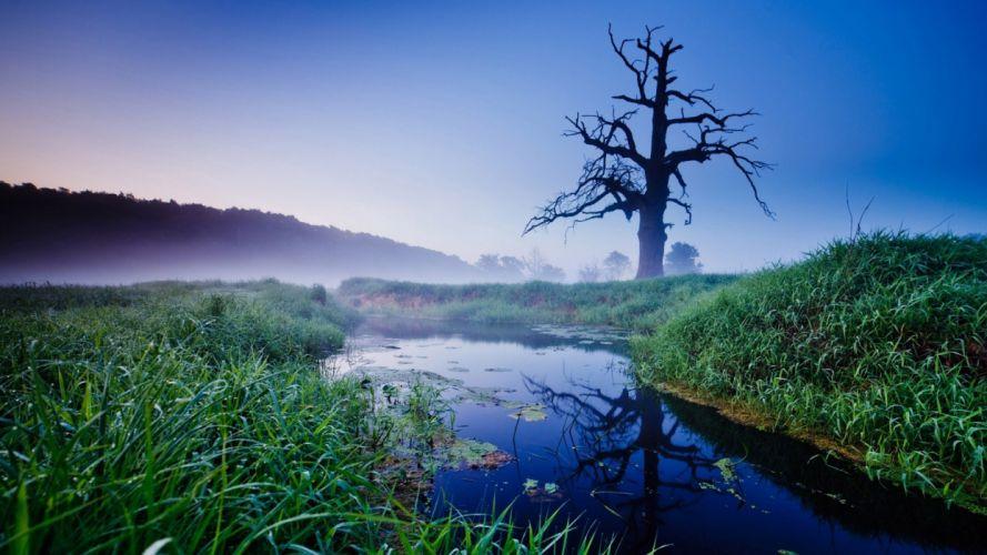 nature trees grass fog lakes wallpaper