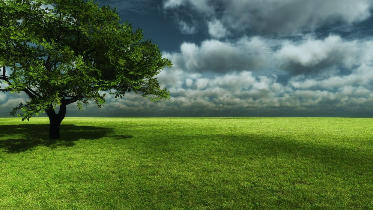 nature trees fields wallpaper