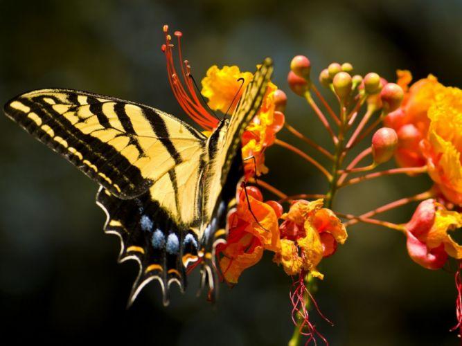 flowers insects butterflies wallpaper