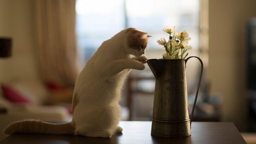 flowers cats animals Ben Torode wallpaper