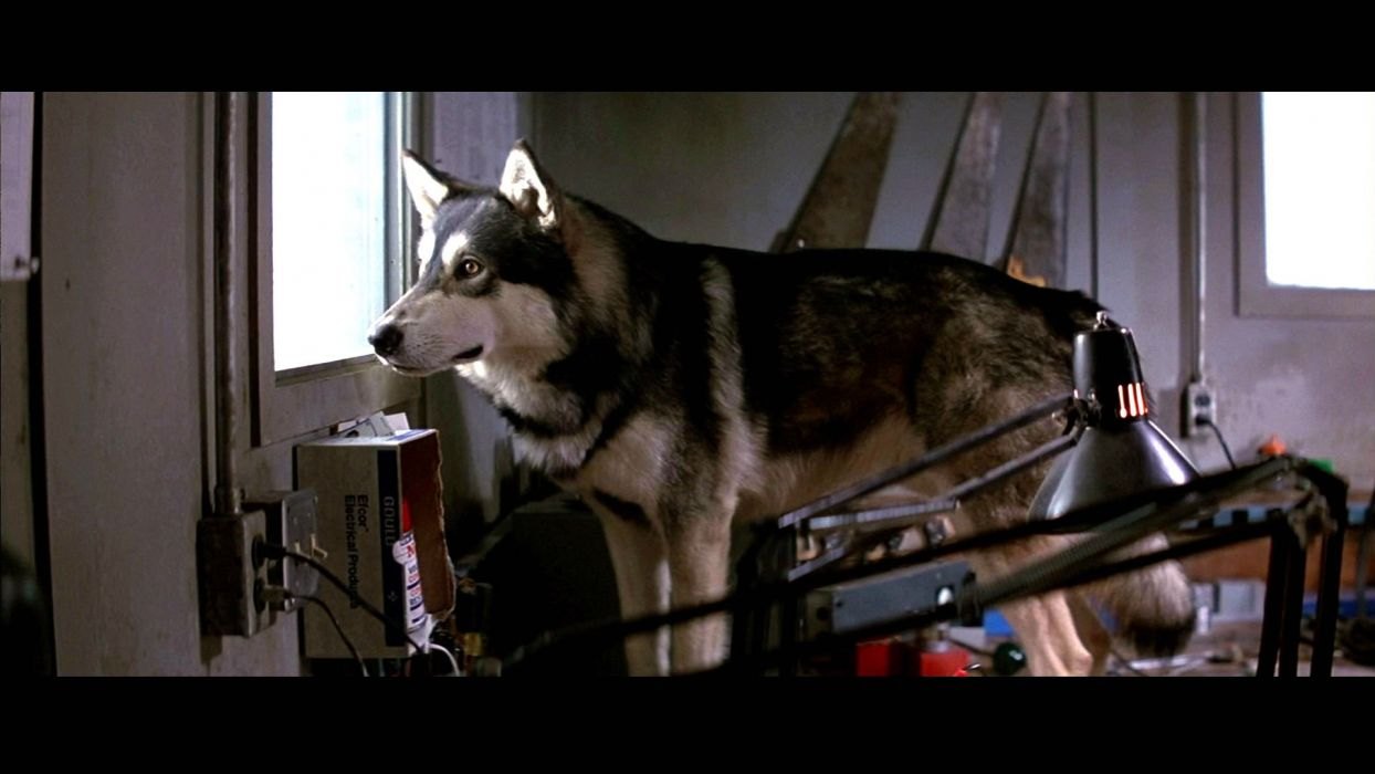 THE THING horror mystery thriller sci-fi husky dog   f wallpaper