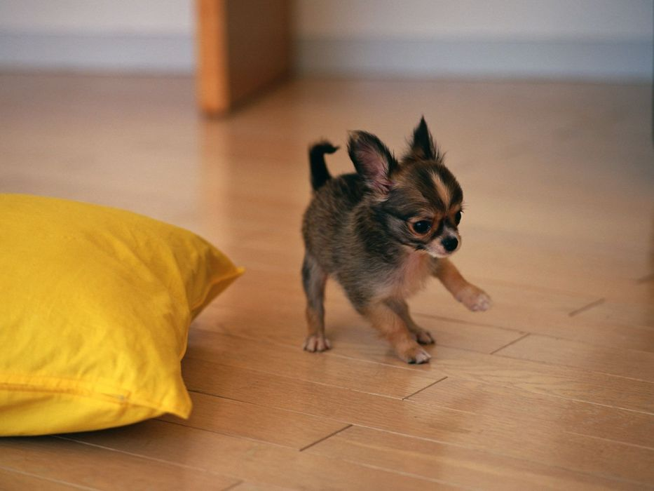 animals dogs pets wallpaper
