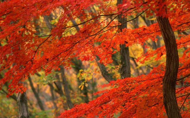 nature trees autumn forests leaves woods wallpaper