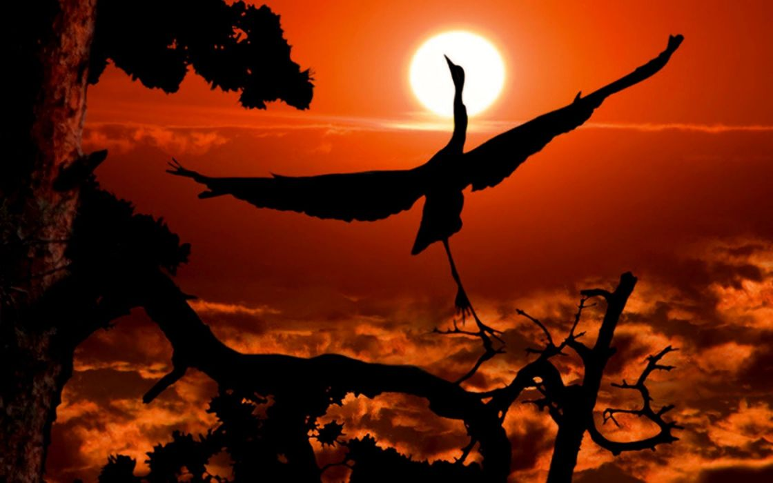 sunset birds cranes skyscapes wallpaper