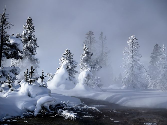winter snow forests wallpaper