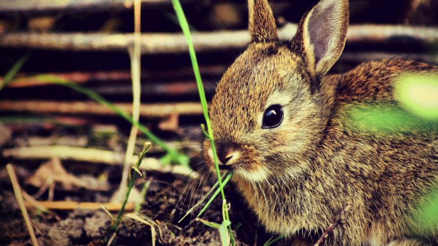 bunnies nature animals wallpaper