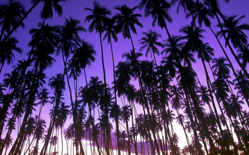 landscapes nature Hawaii palm trees Grove wallpaper