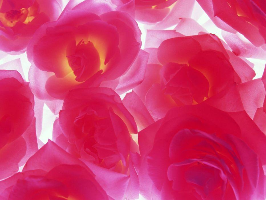 close-up flowers wallpaper