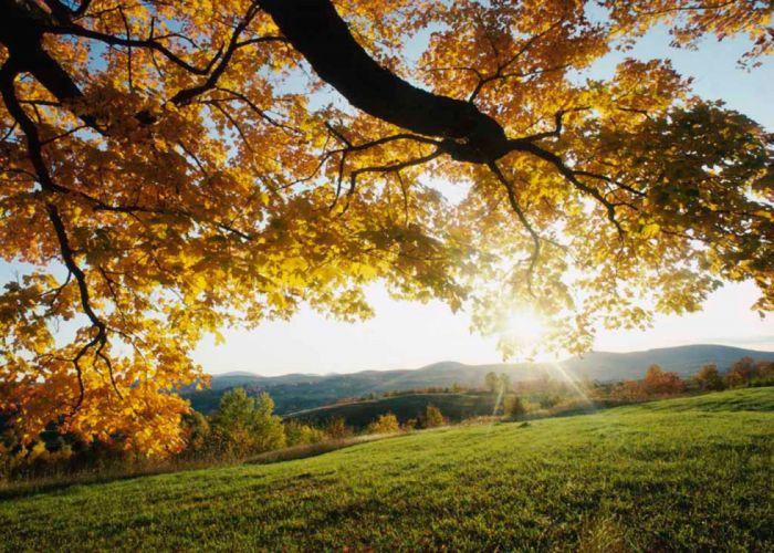 Autumn Leaves 1680x1200 wallpaper