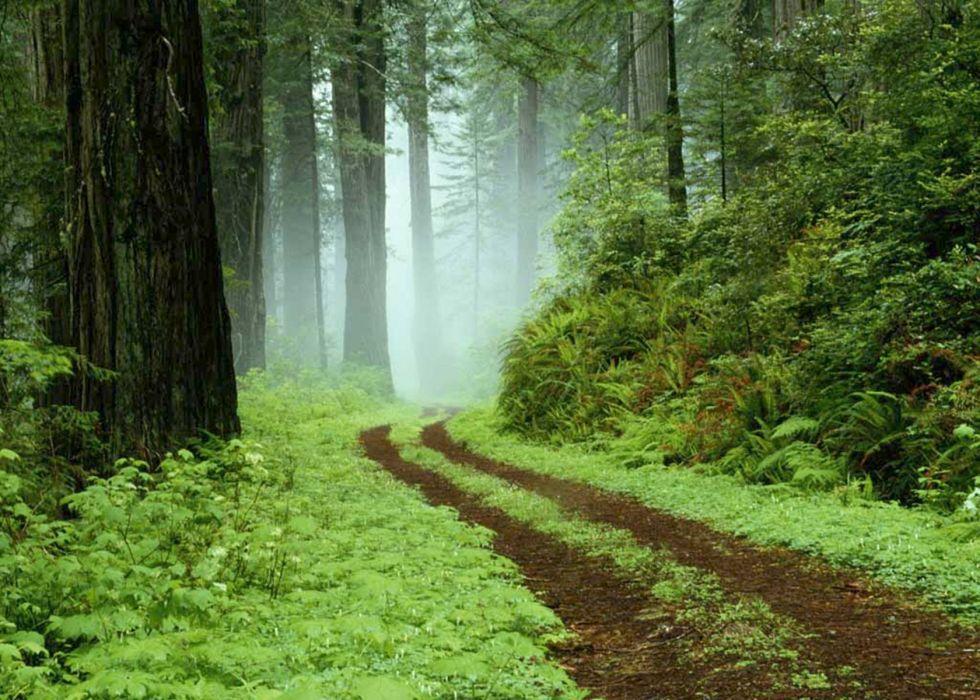 Forest 1680x1200 wallpaper