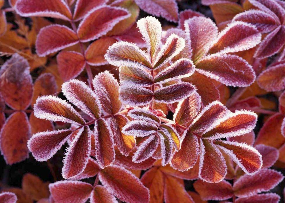 Winter Leaves 1680x1200 wallpaper