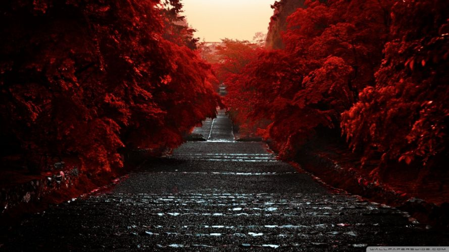 Road Of Red wallpaper