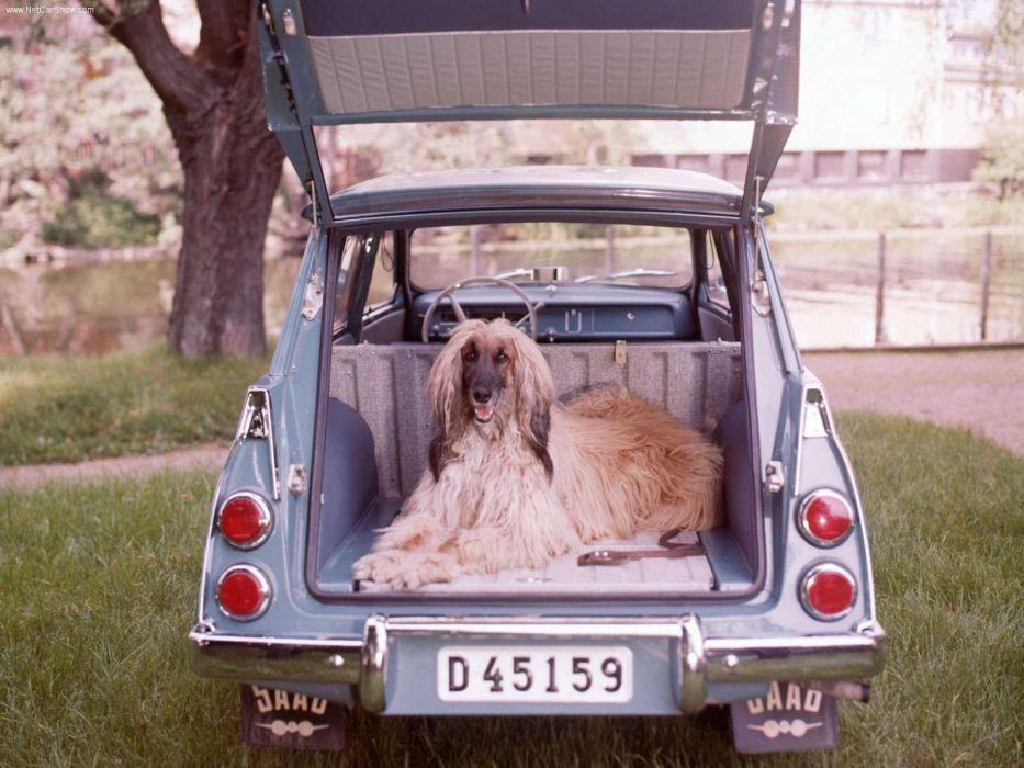 afegan round car dog wallpaper