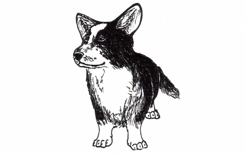 animals sketches wallpaper