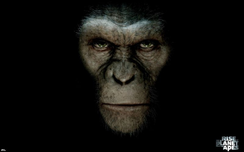 movies apes monkeys Rise of the Planet of the Apes cezar wallpaper