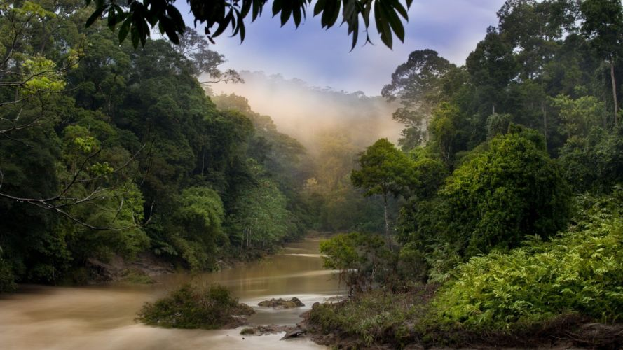 nature dawn jungle forests Malaysia rivers wallpaper