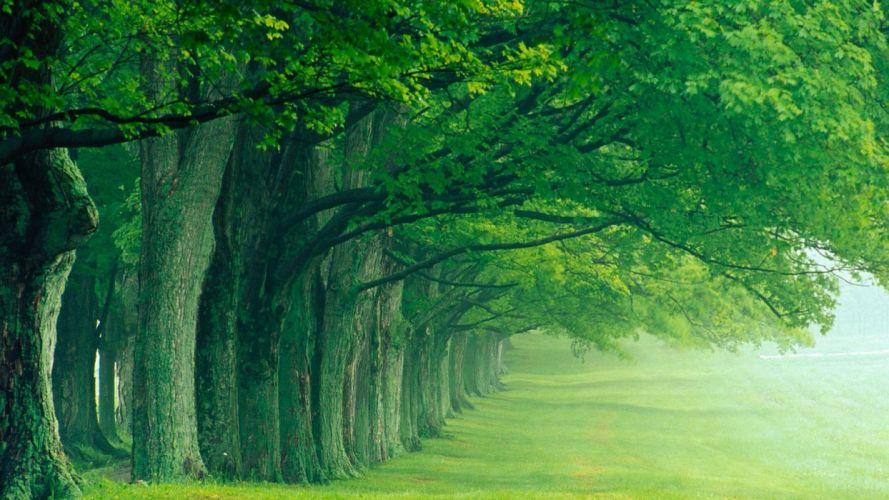 green nature trees summer louisville wallpaper