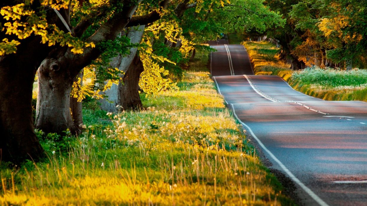 trees roads wallpaper