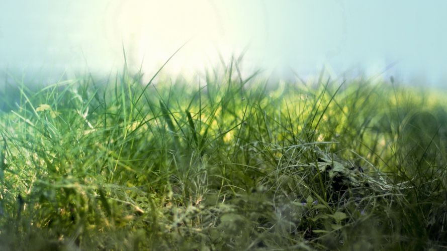 nature grass DeviantART artwork macro depth of field wallpaper