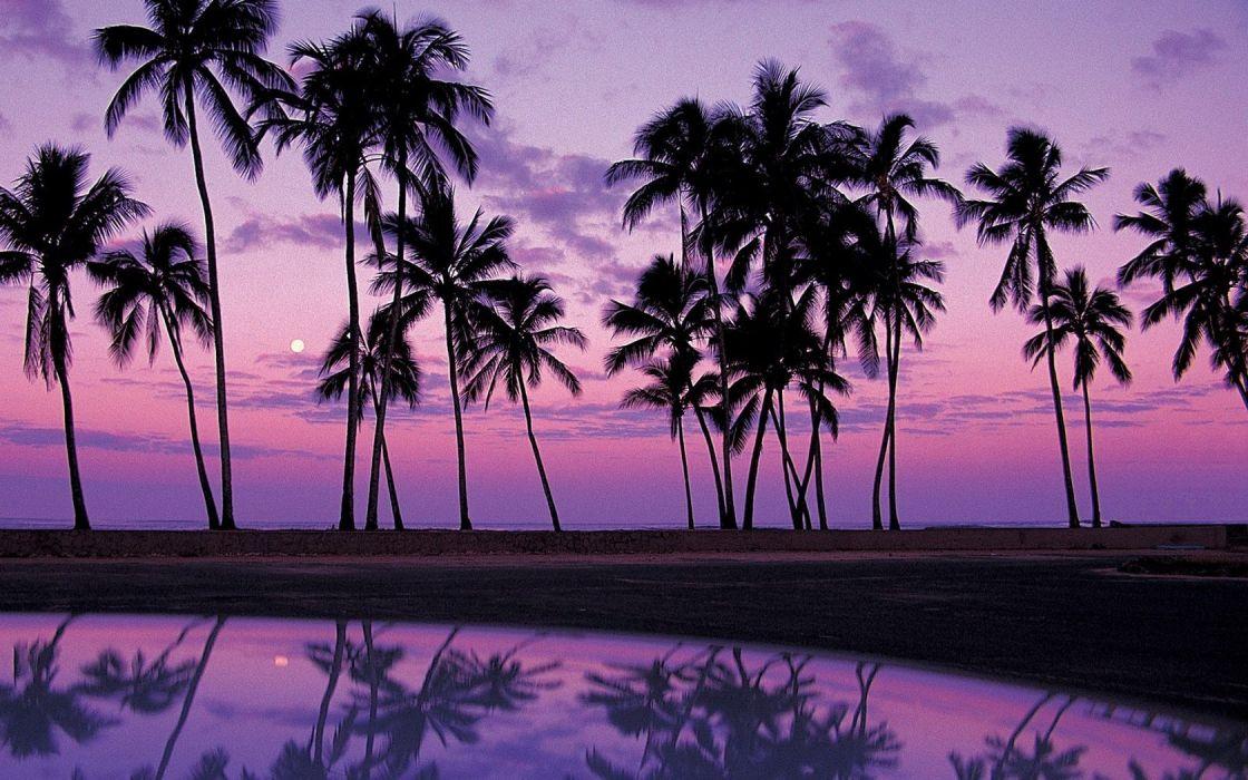 landscapes palm trees Oahu wallpaper