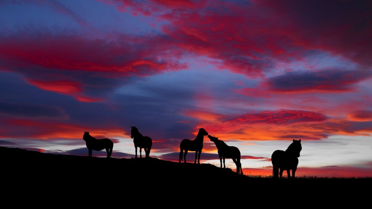 landscapes horses Icelandic wallpaper
