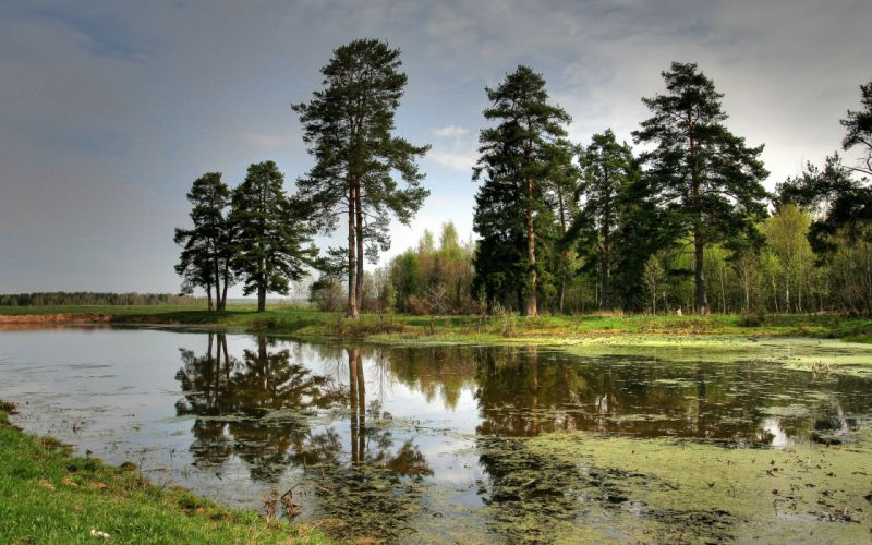 landscapes nature trees reflections wallpaper