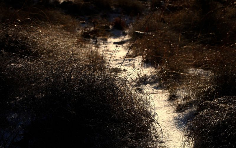 paths depth of field wallpaper