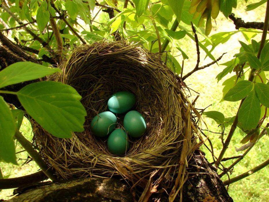 landscapes eggs Turkey nest Kastamonu wallpaper