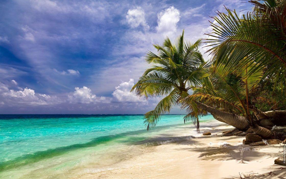 ocean palm trees beaches wallpaper